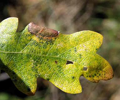 efterårets blade falder