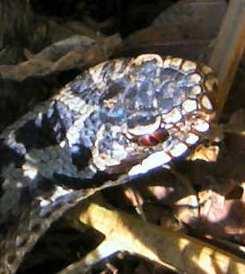 Hamskifte slanger